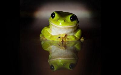 la rana sorda…