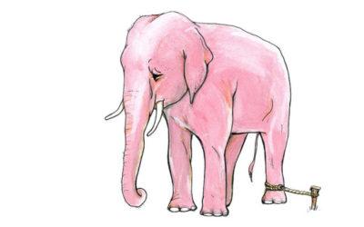 l'elefante del circo