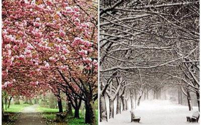 i due alberi