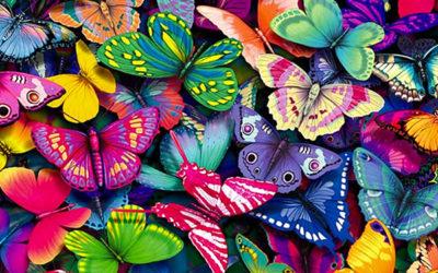il giardino e le farfalle