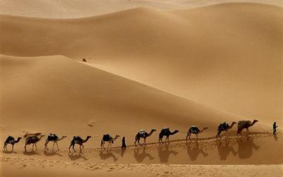 il dodicesimo cammello