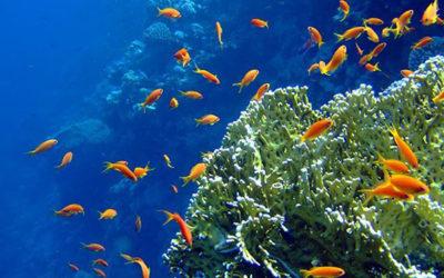 il pesciolino e l'oceano