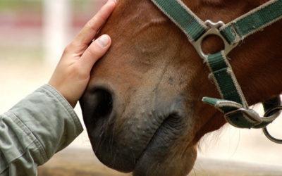il cavallo giusto
