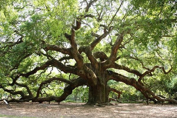 l'albero confuso