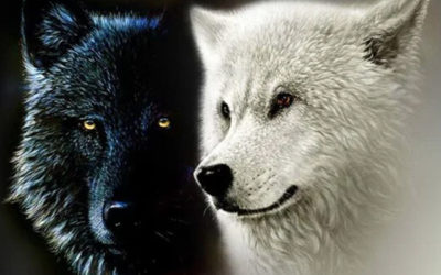 i due lupi