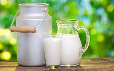 le mucche non danno latte