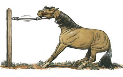 il diavolo e il cavallo